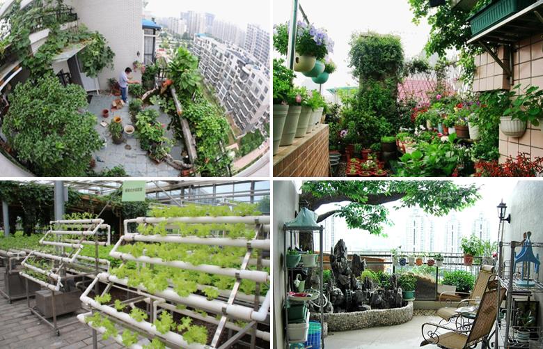 同时,进行家庭园艺产品的开发和销售,家庭园艺专用蔬果,花卉种苗,种子